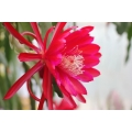 Epiphyllum Action Request