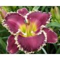 Hemerocallis -daglelies-