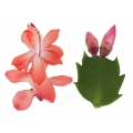 NEW Thor Olivia large plant 9cm container